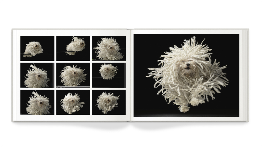 10x8 dog photo book 10x8 pet photo